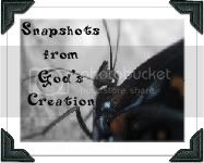 Snapshots From God&#39;s Creation